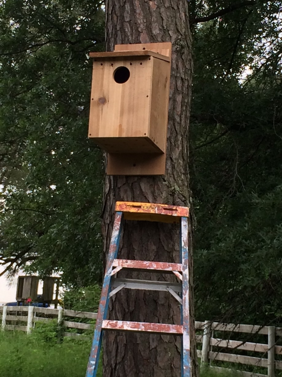 Installed as part of Lannea's Girl Scout Gold award project, this box provides nesting habitat for Screech Owls, Kestrels and Northern Flickers.