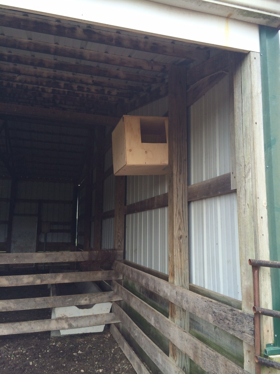 Barn Owl box installed by Lannea.  Increasing use of metal buildings have replaced wooden structures that served as Barn Owl nesting sites