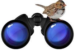 Binoculars Harris Sparrow